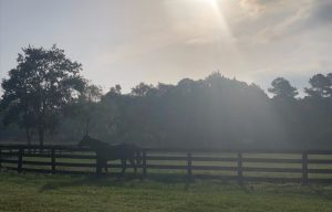 de Meric Thoroughbred Sales Ocala Marion County Founder Horse Farms Forever